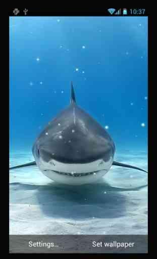 Requin Fond D écran Animé Application Android Allbestapps