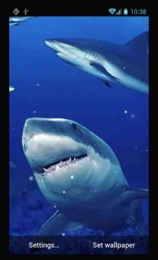 Requin Fond D Ecran Anime Application Android Allbestapps