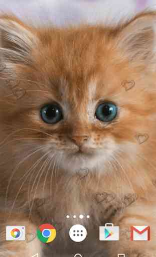 Chatons Fond D Ecran Anime Application Android Allbestapps