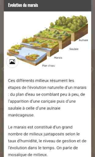 Marais de Saône 3